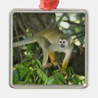 Common Squirrel Monkey, (Saimiri sciureus), Rio Christmas Ornament