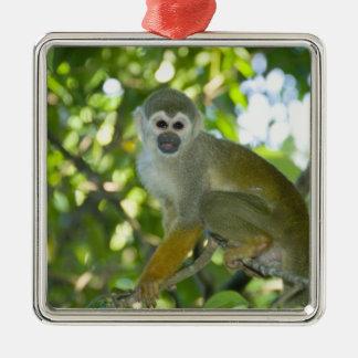 Common Squirrel Monkey (Saimiri sciureus) Rio Christmas Ornament