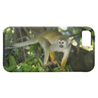 Common Squirrel Monkey, (Saimiri sciureus), Rio iPhone 5 Cover