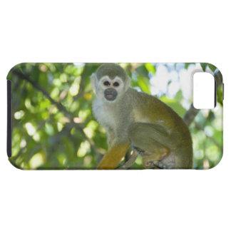 Common Squirrel Monkey (Saimiri sciureus) Rio iPhone 5 Covers