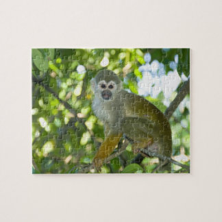 Common Squirrel Monkey (Saimiri sciureus) Rio Jigsaw Puzzle