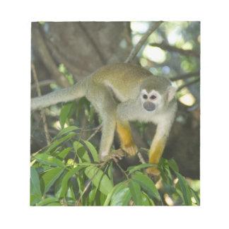 Common Squirrel Monkey, (Saimiri sciureus), Rio Notepad