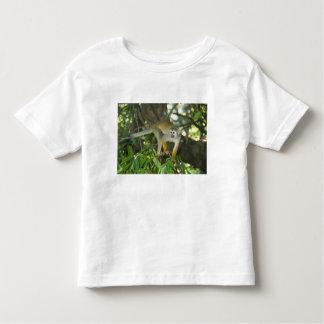 Common Squirrel Monkey, (Saimiri sciureus), Rio Shirt