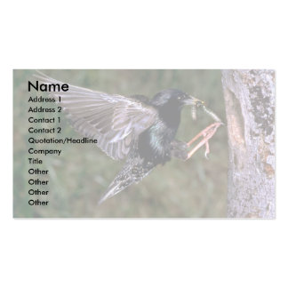Common Starling with worm Pack Of Standard Business Cards