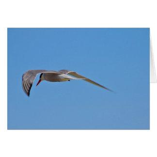 Common Tern Greeting Card