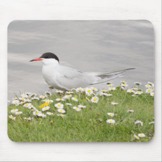 Common Tern Mouse Mat