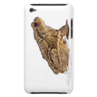Common toad or European toad (Bufo bufo) pissing iPod Case-Mate Cases