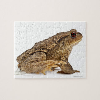 Common toad or European toad (Bufo bufo) pissing Puzzle