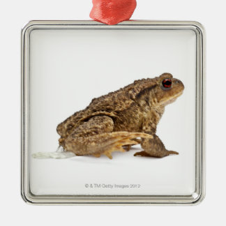 Common toad or European toad (Bufo bufo) pissing Silver-Colored Square Decoration