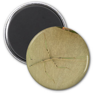 Common Walkingstick Diapheromera femorata Items Fridge Magnet