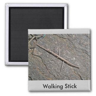 Common Walkingstick (Diapheromera femorata) Items Square Magnet