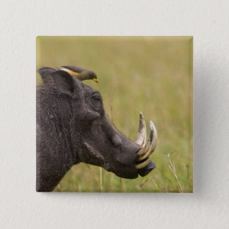 Common Warthog Phacochoerus africanus) with 15 Cm Square Badge