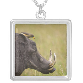 Common Warthog Phacochoerus africanus) with Silver Plated Necklace