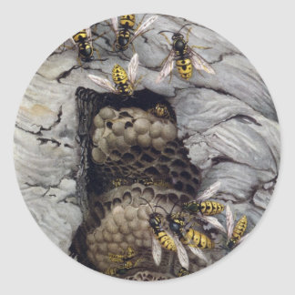 COMMON WASPS 2 ROUND STICKERS