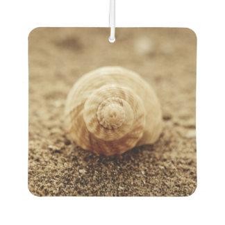 Common Whelk | Botany Bay