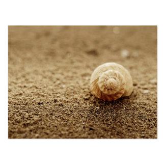 Common Whelk | Botany Bay Postcard