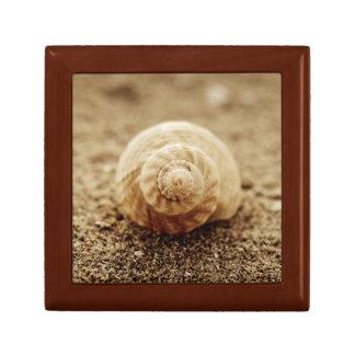 Common Whelk | Botany Bay Small Square Gift Box
