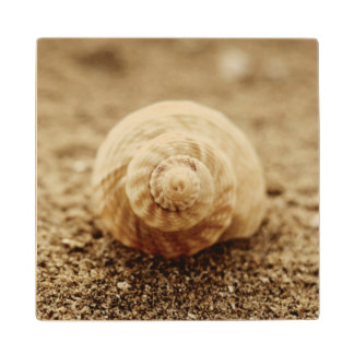 Common Whelk | Botany Bay Wood Coaster