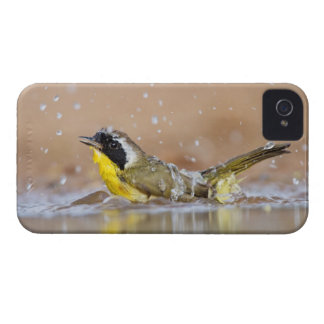 Common yellowthroat bathing iPhone 4 cover