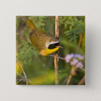 Common Yellowthroat Geothlypis trichas) male, 15 Cm Square Badge