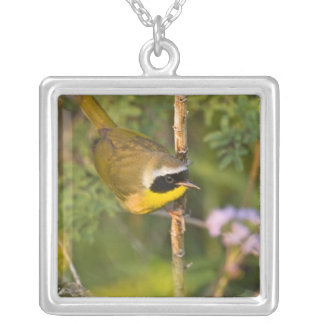Common Yellowthroat Geothlypis trichas) male, Silver Plated Necklace
