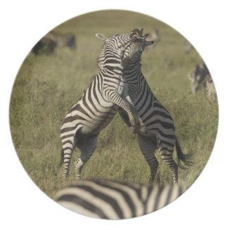 Common Zebra dominance behavior Plate