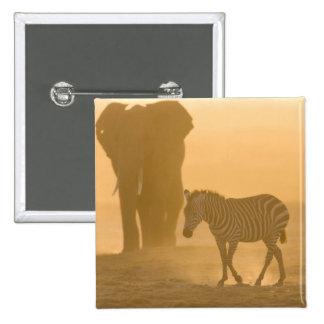Common Zebra, Equus burchelli, and Elephant, 15 Cm Square Badge