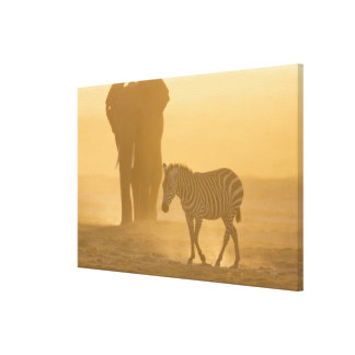 Common Zebra, Equus burchelli, and Elephant, Gallery Wrapped Canvas