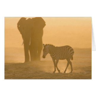 Common Zebra, Equus burchelli, and Elephant, Greeting Cards