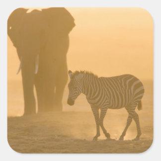Common Zebra, Equus burchelli, and Elephant, Stickers