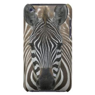 Common Zebra (Equus quagga), close up Barely There iPod Covers