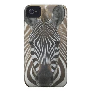Common Zebra (Equus quagga), close up Case-Mate iPhone 4 Cases
