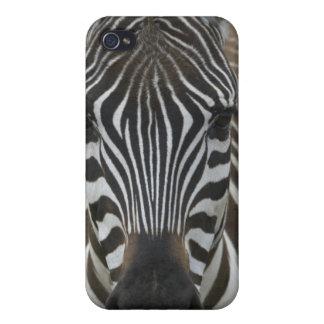 Common Zebra (Equus quagga), close up iPhone 4 Case