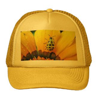 Composition in yellow cap