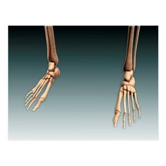 Conceptual Image Of Bones In Human Legs And Feet Postcard