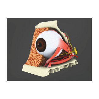 Conceptual Image Of Human Eye Anatomy 1 Canvas Print
