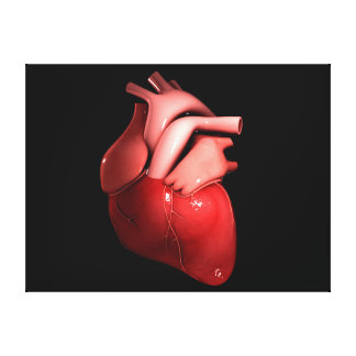 Conceptual Image Of Human Heart 1 Canvas Print
