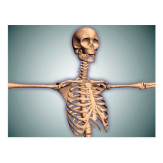 Conceptual Image Of Human Rib Cage And Spinal Postcard