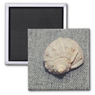 Conch Square Magnet