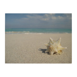 Conch on the Beach: Varadero, Cuba Wood Print