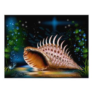 Conch Photo Print