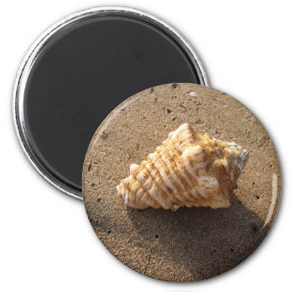 Conch Seashell Sand Beach Magnet