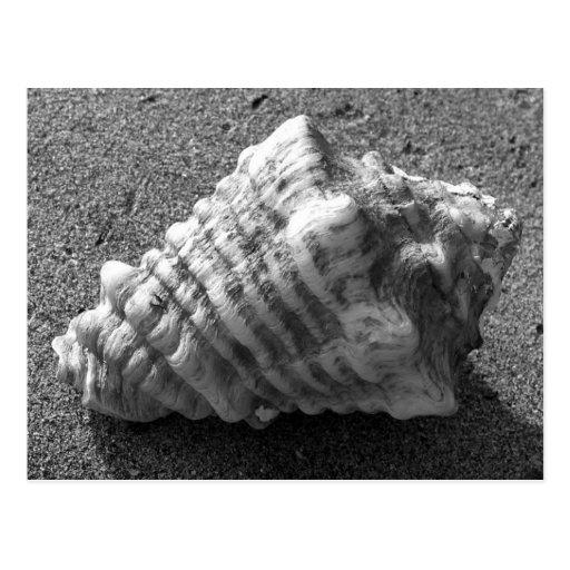 Conch Seashell Sand Beach Postcards
