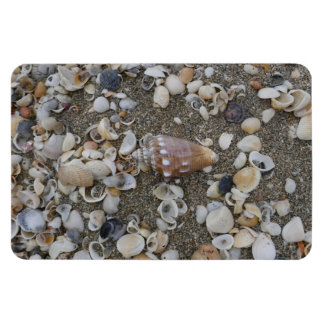 Conch Seashell Treasures Magnet