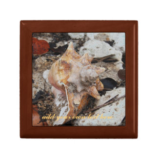 Conch Shell and Coral Jewelry Boxes