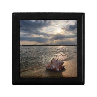 Conch Shell At Beach | St. Augustine, Fl Small Square Gift Box
