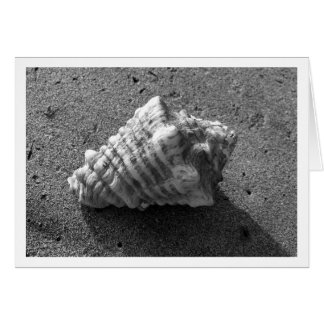Conch Shell Black and White Card