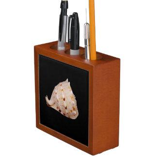 Conch Shell Desk Organiser