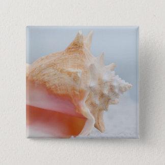 Conch Shell | Florida 15 Cm Square Badge