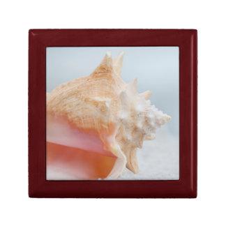 Conch Shell | Florida Small Square Gift Box